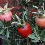 ceramic rosehips