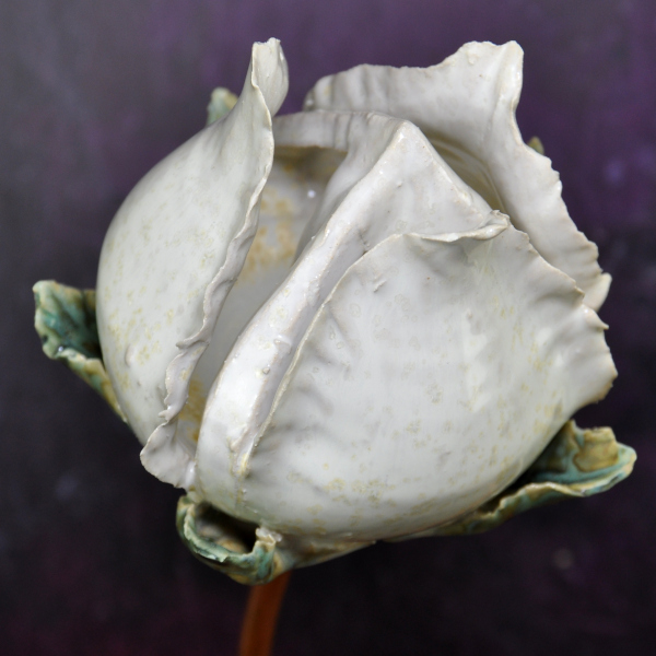 white-cream rosebud